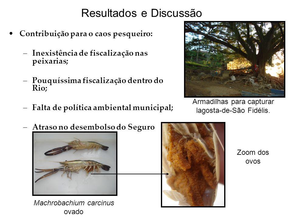 Resultados e Discussão Contribuição para o caos pesqueiro: –Inexistência de fiscalização nas peixarias; –Pouquíssima fiscalização dentro do Rio; –Falt