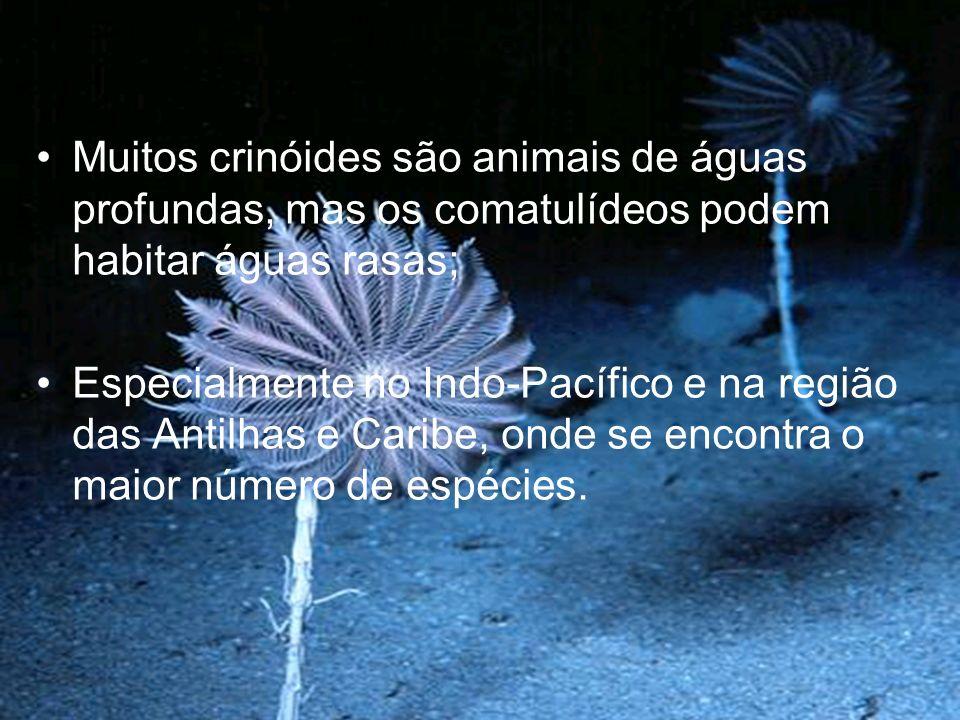 Muitos crinóides são animais de águas profundas, mas os comatulídeos podem habitar águas rasas; Especialmente no Indo-Pacífico e na região das Antilhas e Caribe, onde se encontra o maior número de espécies.