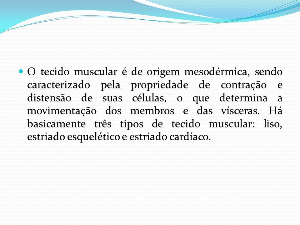 O tecido muscular é de origem mesodérmica, sendo caracterizado pela propriedade de contração e distensão de suas células, o que determina a movimentaç