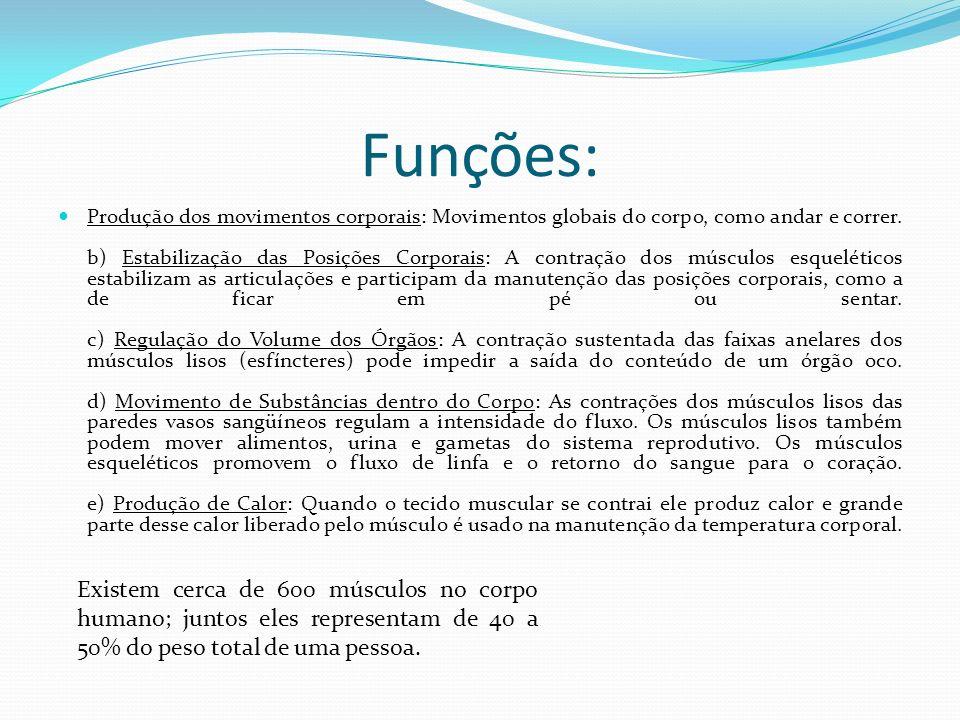 Funções: Produção dos movimentos corporais: Movimentos globais do corpo, como andar e correr. b) Estabilização das Posições Corporais: A contração dos