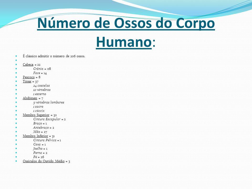 Número de Ossos do Corpo Humano: É clássico admitir o número de 206 ossos. Cabeça = 22 Crânio = 08 Face = 14 Pescoço = 8 Tórax = 37 24 costelas 12 vér