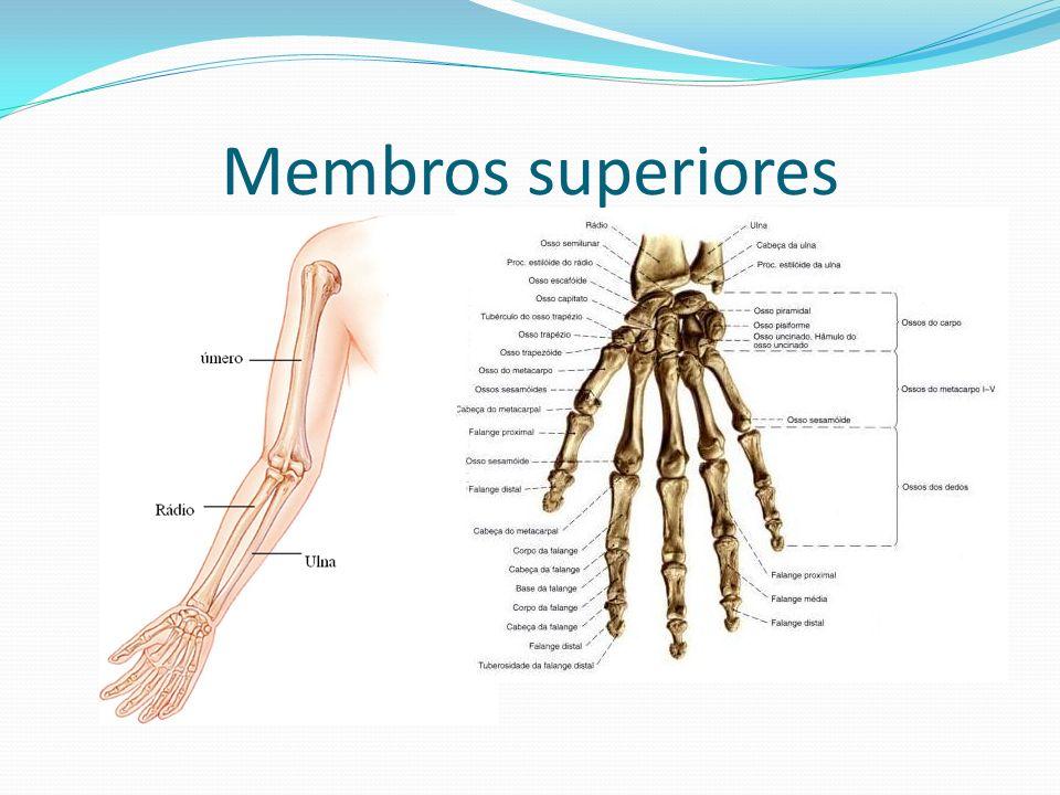 A fadiga muscular Quando uma pessoa realiza um esforço muscular muito intenso, é comum ela ficar cansada e sentir dores na região muscular mais solicitada.