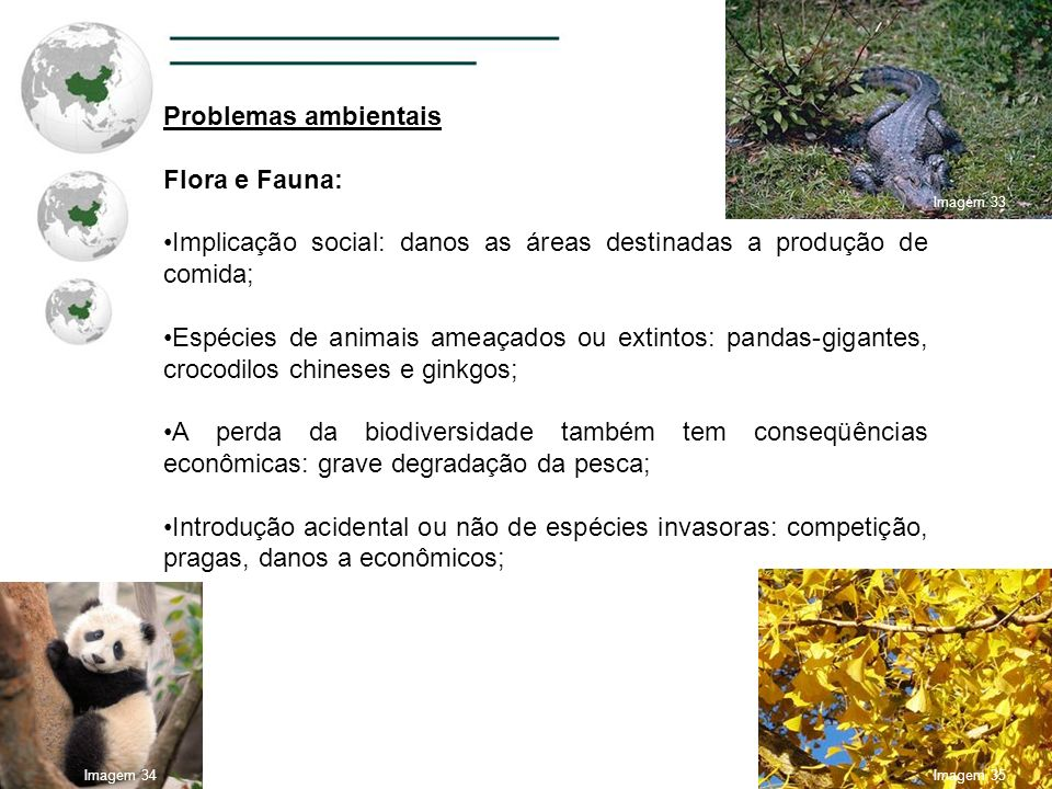 Problemas ambientais Flora e Fauna: Implicação social: danos as áreas destinadas a produção de comida; Espécies de animais ameaçados ou extintos: pand