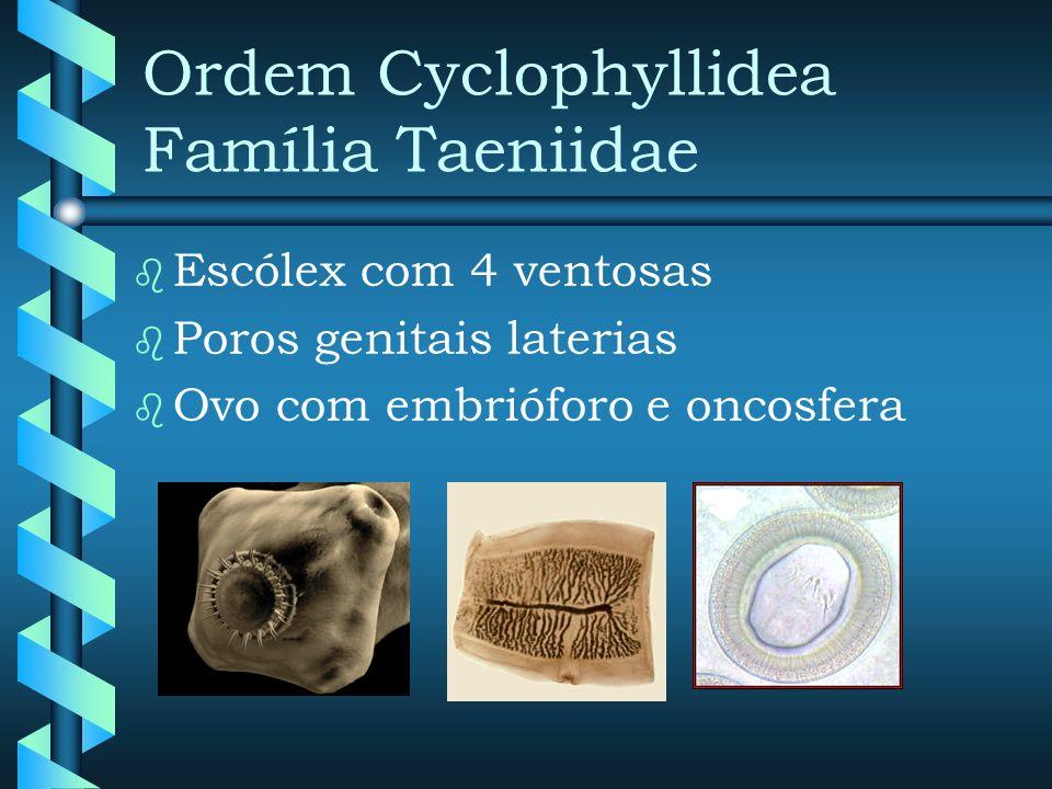 Taenia solium PROGLÓTES GRÁVIDOS Taenia saginata Quadrangular Útero c/ 12 pares Dendrítica 80 mil ovos Retangular Útero c/ 26 ramificações Dicotômicas 160 mil ovos