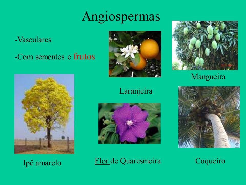 Angiospermas CoqueiroFlor de Quaresmeira Ipê amarelo Mangueira Laranjeira -Vasculares -Com sementes e frutos