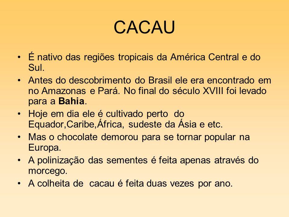 CACAU É nativo das regiões tropicais da América Central e do Sul. Antes do descobrimento do Brasil ele era encontrado em no Amazonas e Pará. No final