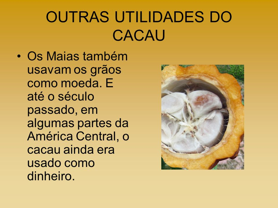 OUTRAS UTILIDADES DO CACAU Os Maias também usavam os grãos como moeda. E até o século passado, em algumas partes da América Central, o cacau ainda era