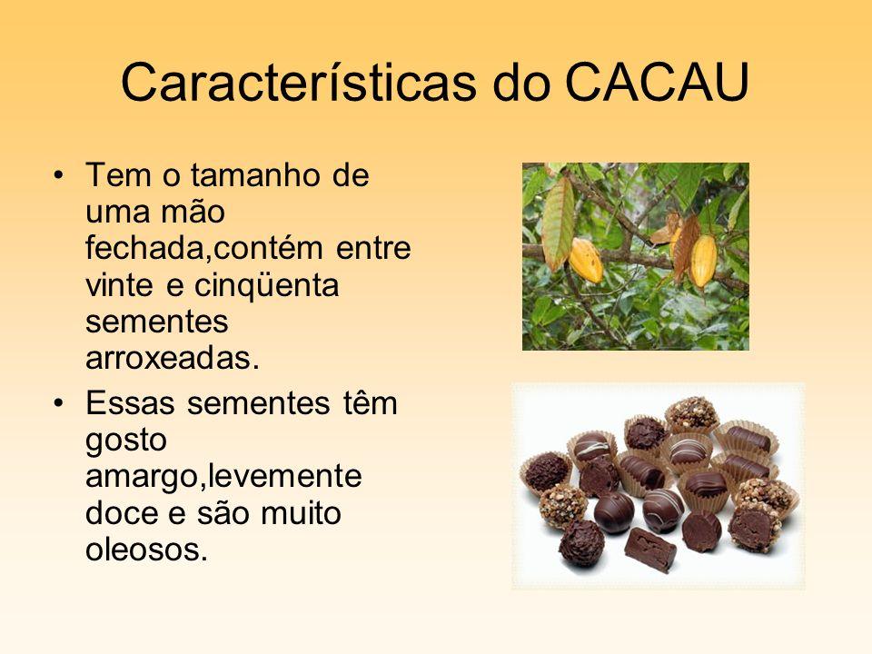 Características do CACAU Tem o tamanho de uma mão fechada,contém entre vinte e cinqüenta sementes arroxeadas. Essas sementes têm gosto amargo,levement