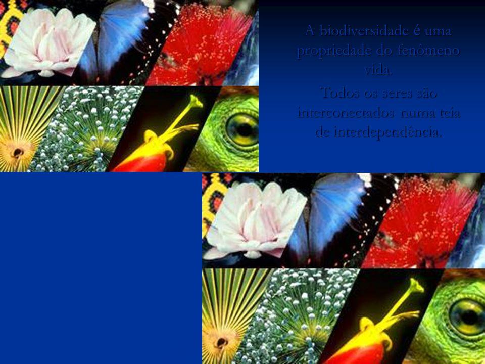 A biodiversidade é uma propriedade do fenômeno vida. Todos os seres são interconectados numa teia de interdependência. O homem não teceu o fio da vida