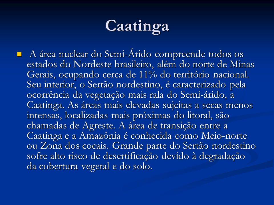 Caatinga A área nuclear do Semi-Árido compreende todos os estados do Nordeste brasileiro, além do norte de Minas Gerais, ocupando cerca de 11% do terr
