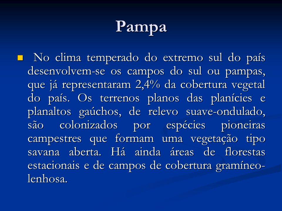 Pampa No clima temperado do extremo sul do país desenvolvem-se os campos do sul ou pampas, que já representaram 2,4% da cobertura vegetal do país. Os