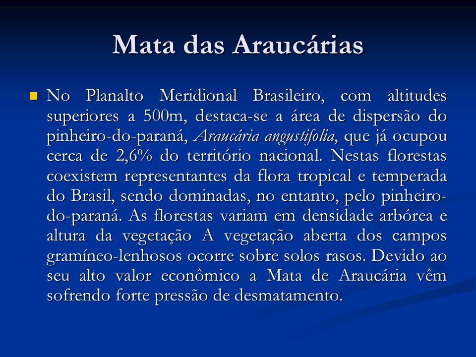 Mata das Araucárias No Planalto Meridional Brasileiro, com altitudes superiores a 500m, destaca-se a área de dispersão do pinheiro-do-paraná, Araucári