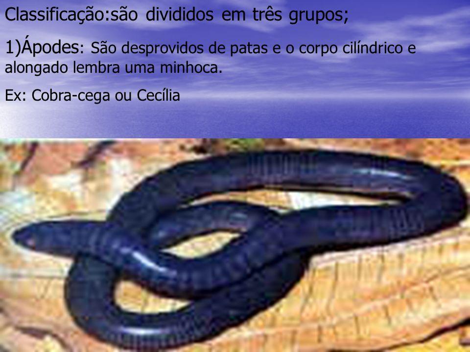 2) Urodelos: São anfíbios que possuem cauda.Apresentam uma fase larvária denominada AXOLOTLE.