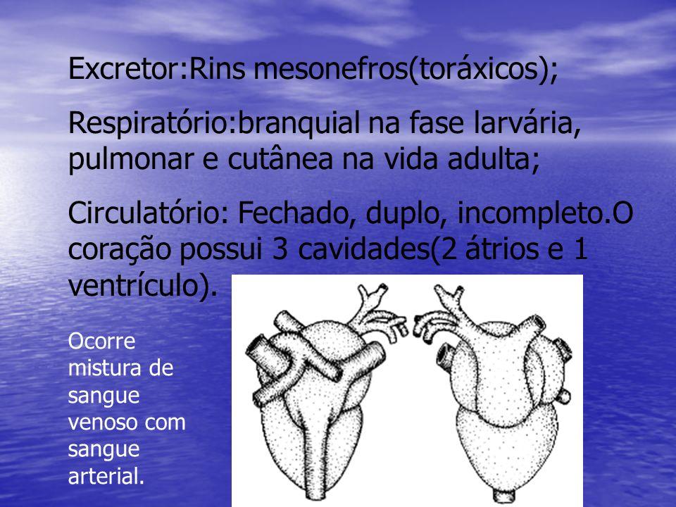 Nervoso: possuem 10 pares de nervos cranianos; Reprodutor:São dióicos, a fecundação é externa e o desenvolvimento é indireto.
