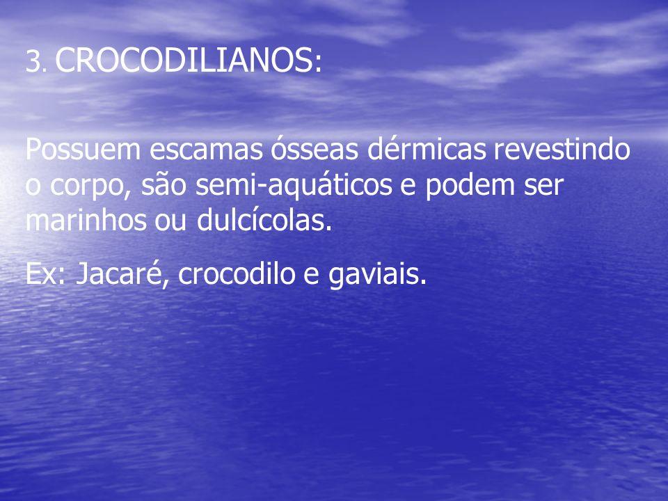 3. CROCODILIANOS : Possuem escamas ósseas dérmicas revestindo o corpo, são semi-aquáticos e podem ser marinhos ou dulcícolas. Ex: Jacaré, crocodilo e