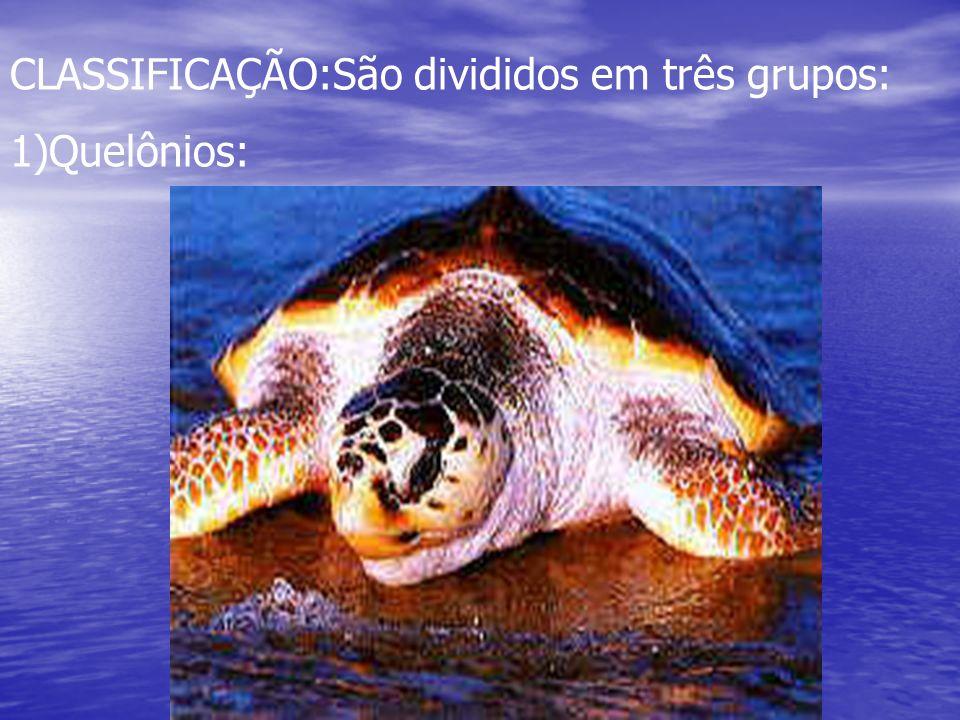 CLASSIFICAÇÃO:São divididos em três grupos: 1)Quelônios: