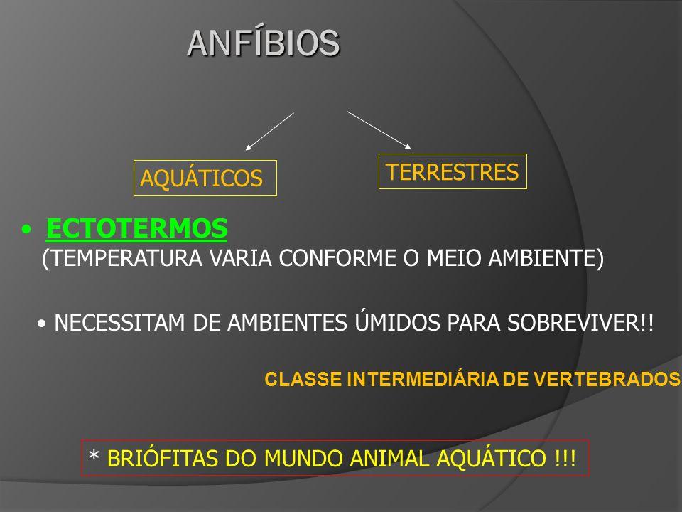 CLASSE INTERMEDIÁRIA DE VERTEBRADOS AQUÁTICOS TERRESTRES ECTOTERMOS (TEMPERATURA VARIA CONFORME O MEIO AMBIENTE) * BRIÓFITAS DO MUNDO ANIMAL AQUÁTICO