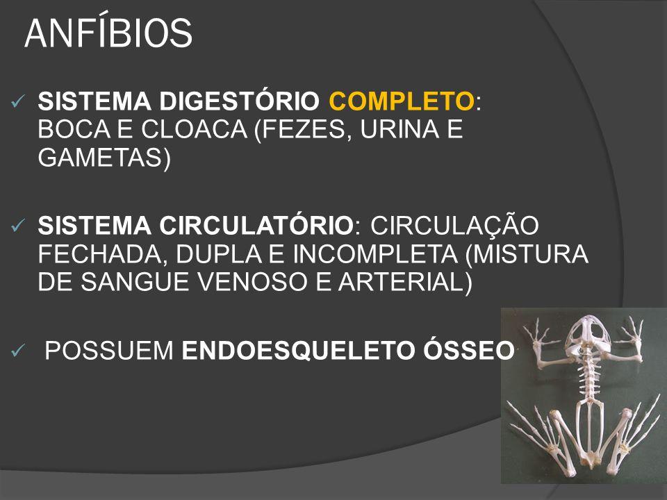ANFÍBIOS SISTEMA DIGESTÓRIO COMPLETO: BOCA E CLOACA (FEZES, URINA E GAMETAS) SISTEMA CIRCULATÓRIO: CIRCULAÇÃO FECHADA, DUPLA E INCOMPLETA (MISTURA DE
