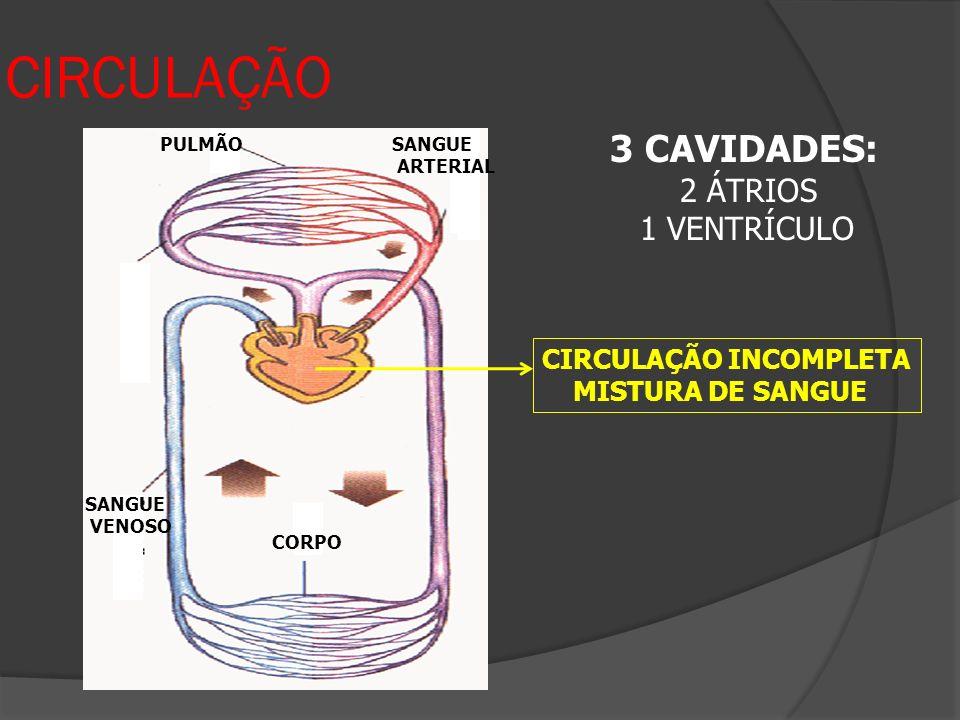 CIRCULAÇÃO 3 CAVIDADES: 2 ÁTRIOS 1 VENTRÍCULO CIRCULAÇÃO INCOMPLETA MISTURA DE SANGUE CORPO SANGUE VENOSO SANGUE ARTERIAL PULMÃO
