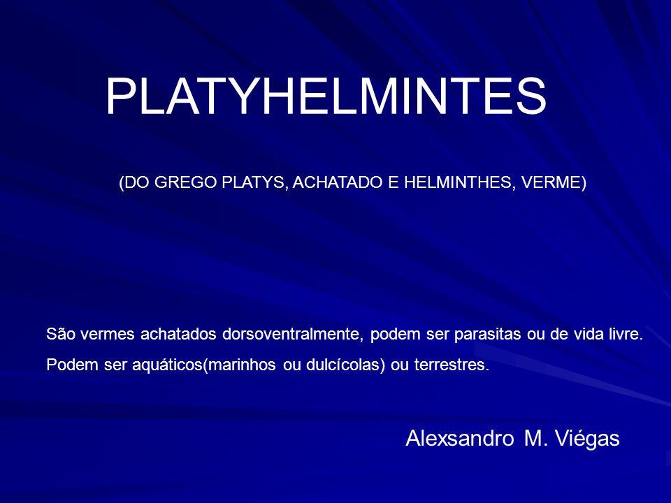 PLATYHELMINTES (DO GREGO PLATYS, ACHATADO E HELMINTHES, VERME) São vermes achatados dorsoventralmente, podem ser parasitas ou de vida livre.