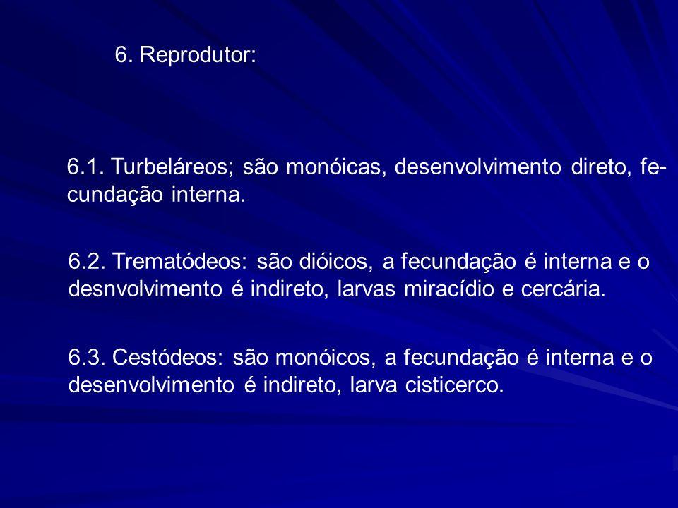 6.Reprodutor: 6.1. Turbeláreos; são monóicas, desenvolvimento direto, fe- cundação interna.