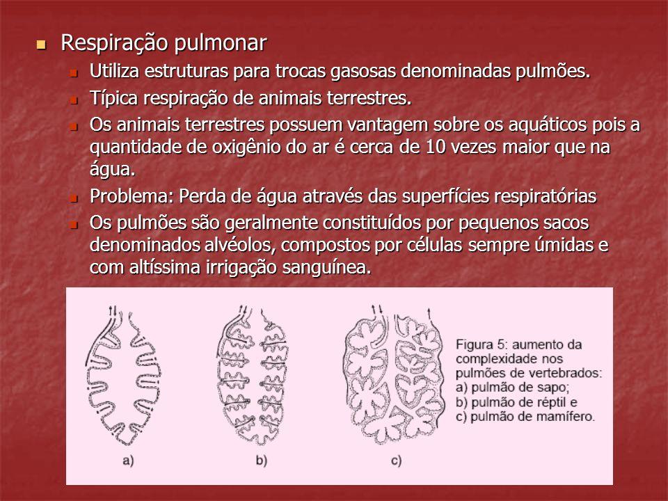 Respiração pulmonar Respiração pulmonar Utiliza estruturas para trocas gasosas denominadas pulmões. Utiliza estruturas para trocas gasosas denominadas