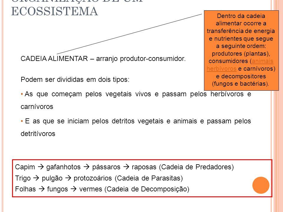 ORGANIZAÇÃO DE UM ECOSSISTEMA CADEIA ALIMENTAR – arranjo produtor-consumidor. Podem ser divididas em dois tipos: As que começam pelos vegetais vivos e