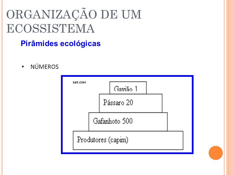 ORGANIZAÇÃO DE UM ECOSSISTEMA Pirâmides ecológicas NÚMEROS