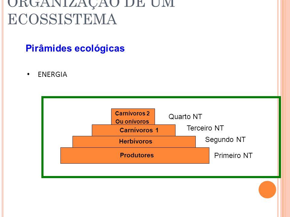 ORGANIZAÇÃO DE UM ECOSSISTEMA Pirâmides ecológicas ENERGIA Primeiro NT Segundo NT Terceiro NT Quarto NT Produtores Herbívoros Carnívoros 1 Carnívoros