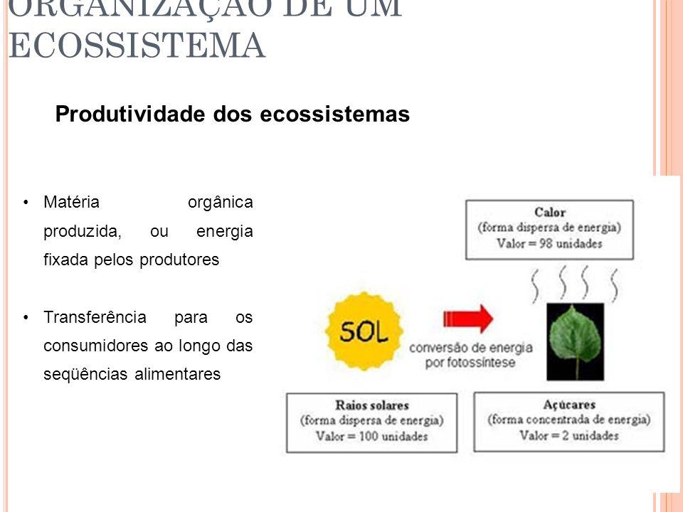 ORGANIZAÇÃO DE UM ECOSSISTEMA Produtividade dos ecossistemas Matéria orgânica produzida, ou energia fixada pelos produtores Transferência para os cons