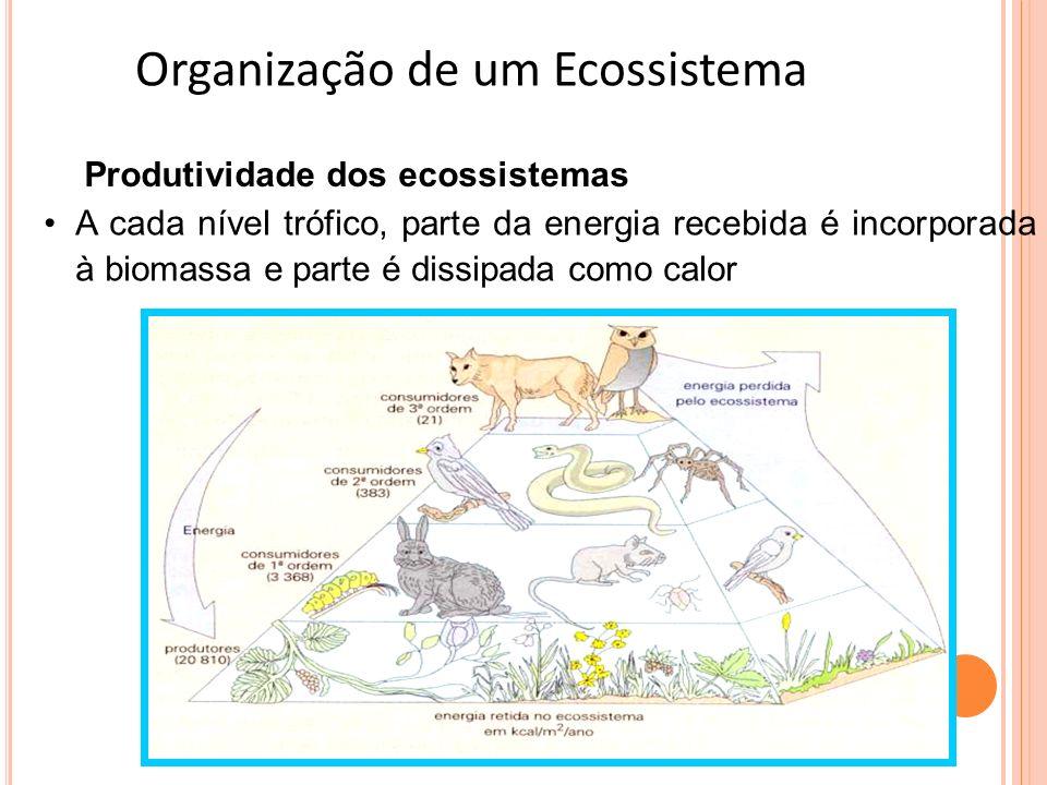Organização de um Ecossistema Produtividade dos ecossistemas A cada nível trófico, parte da energia recebida é incorporada à biomassa e parte é dissip