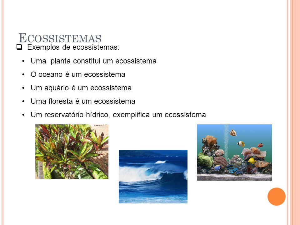 E COSSISTEMAS Exemplos de ecossistemas: Uma planta constitui um ecossistema O oceano é um ecossistema Um aquário é um ecossistema Uma floresta é um ec