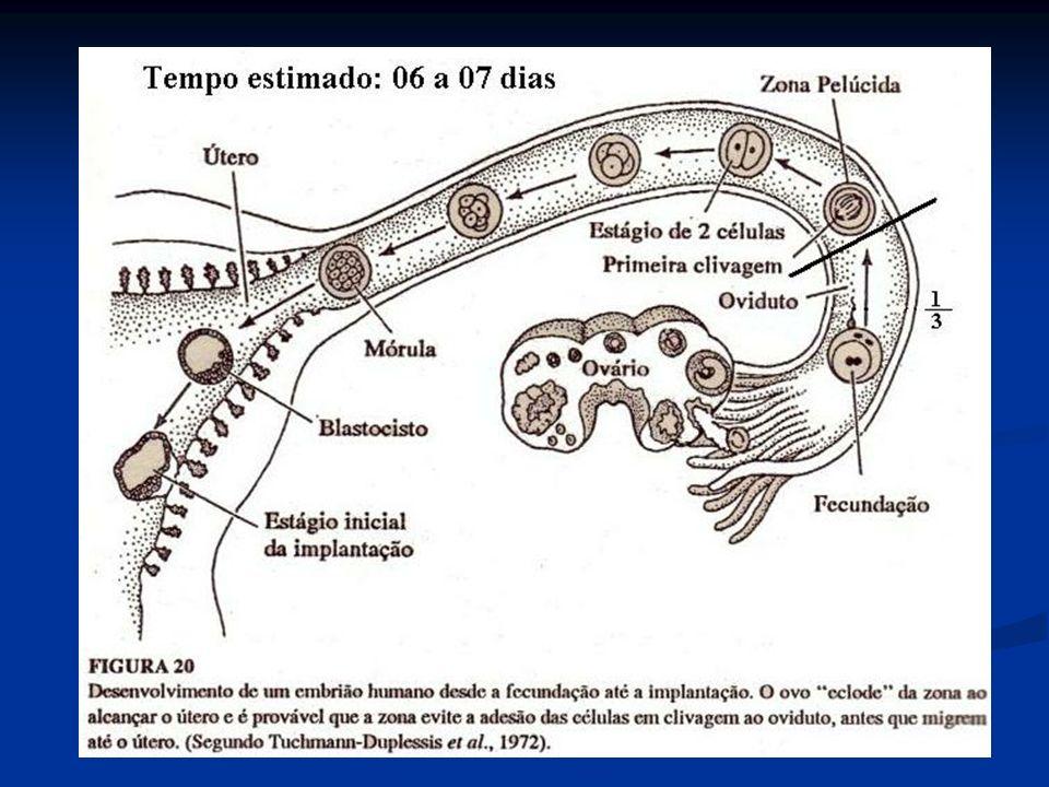 TIPOS DE OVOS E TIPOS DE SEGMENTAÇÃO Tipos de ovos Tipos de ovos Alécitos Alécitos Oligolécitos – Equinodermas e mamíferos.
