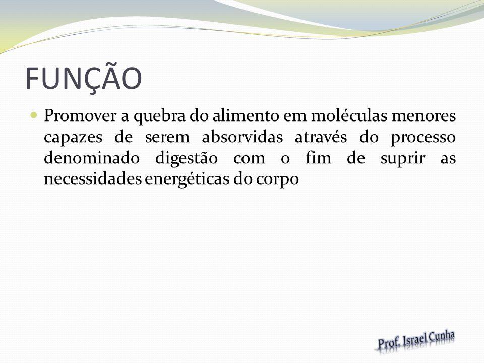 ETAPAS 1 Ingestão do alimento Moléculas grandes 2 Digestão Moléculas menores 3 Absorção Utilização da energia