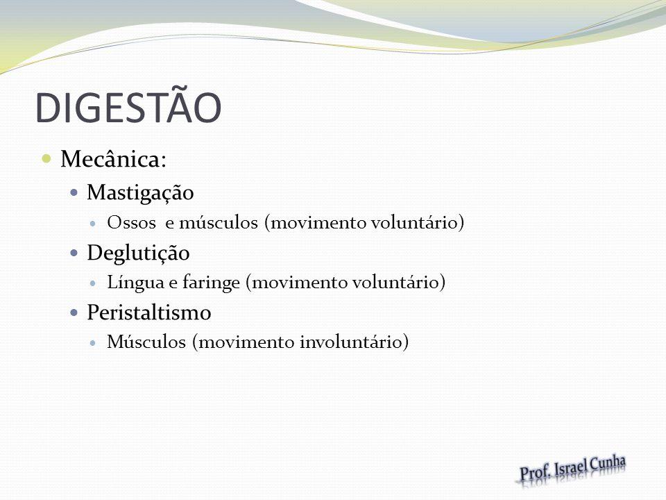 DIGESTÃO Mecânica: Mastigação Ossos e músculos (movimento voluntário) Deglutição Língua e faringe (movimento voluntário) Peristaltismo Músculos (movim
