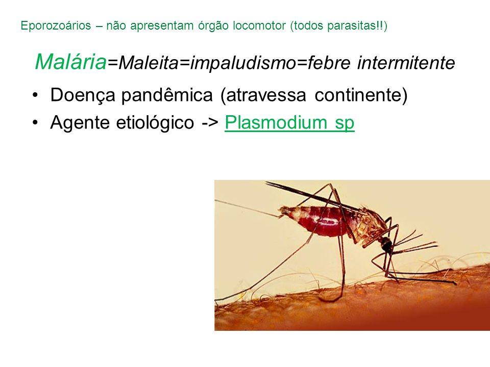 Malária =Maleita=impaludismo=febre intermitente Doença pandêmica (atravessa continente) Agente etiológico -> Plasmodium sp Eporozoários – não apresent