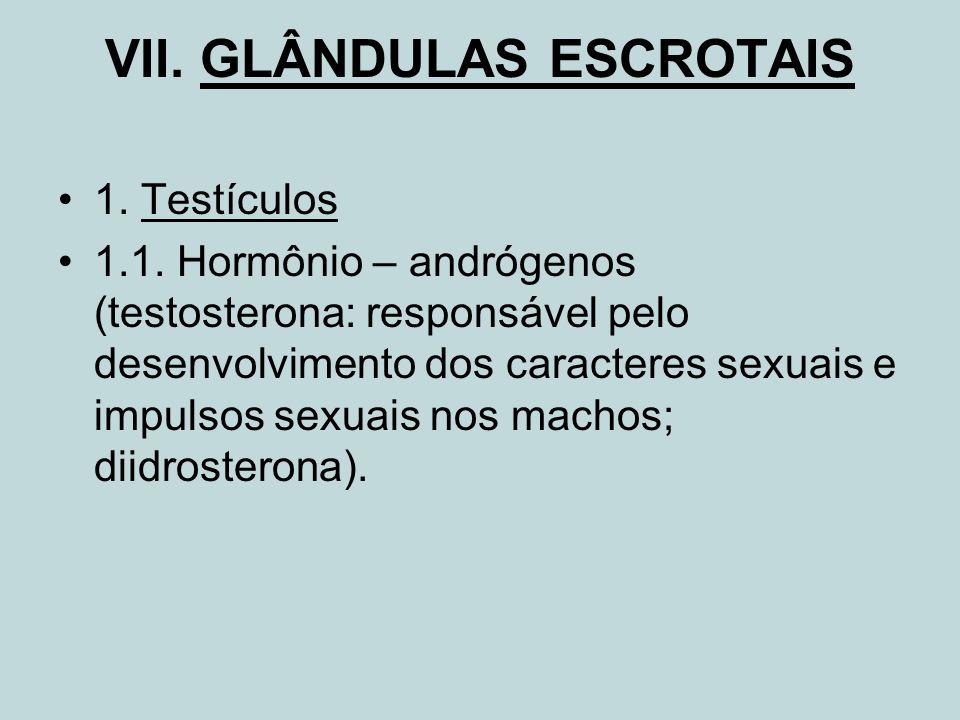 VII. GLÂNDULAS ESCROTAIS 1. Testículos 1.1. Hormônio – andrógenos (testosterona: responsável pelo desenvolvimento dos caracteres sexuais e impulsos se