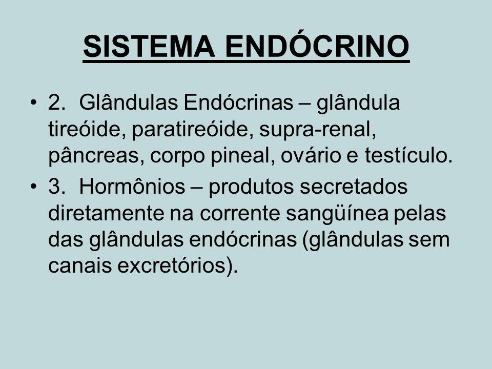 SISTEMA ENDÓCRINO 2.Glândulas Endócrinas – glândula tireóide, paratireóide, supra-renal, pâncreas, corpo pineal, ovário e testículo. 3.Hormônios – pro