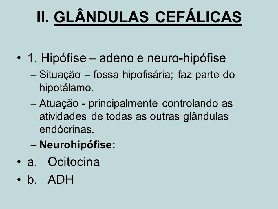 II. GLÂNDULAS CEFÁLICAS 1. Hipófise – adeno e neuro-hipófise –Situação – fossa hipofisária; faz parte do hipotálamo. –Atuação - principalmente control