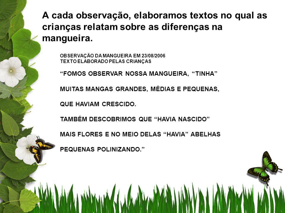 A cada observação, elaboramos textos no qual as crianças relatam sobre as diferenças na mangueira. OBSERVAÇÃO DA MANGUEIRA EM 23/08/2006 TEXTO ELABORA