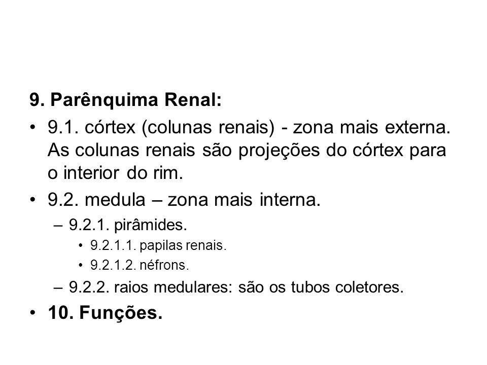 9. Parênquima Renal: 9.1. córtex (colunas renais) - zona mais externa. As colunas renais são projeções do córtex para o interior do rim. 9.2. medula –