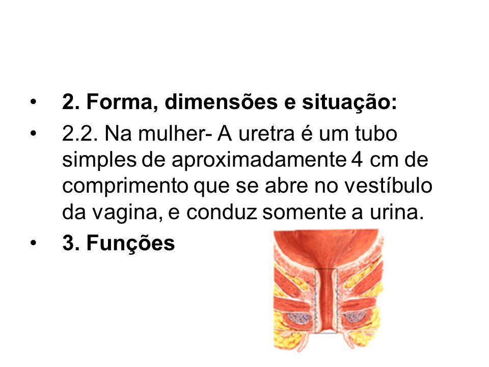 2.Forma, dimensões e situação: 2.2.