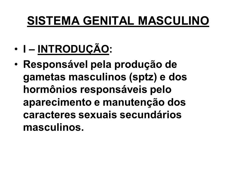 SISTEMA GENITAL MASCULINO I – INTRODUÇÃO: Responsável pela produção de gametas masculinos (sptz) e dos hormônios responsáveis pelo aparecimento e manutenção dos caracteres sexuais secundários masculinos.
