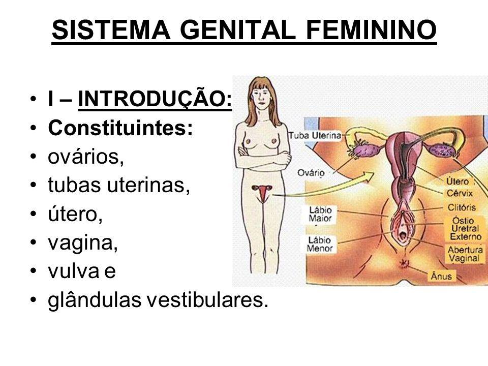 SISTEMA GENITAL FEMININO I – INTRODUÇÃO: Constituintes: ovários, tubas uterinas, útero, vagina, vulva e glândulas vestibulares.