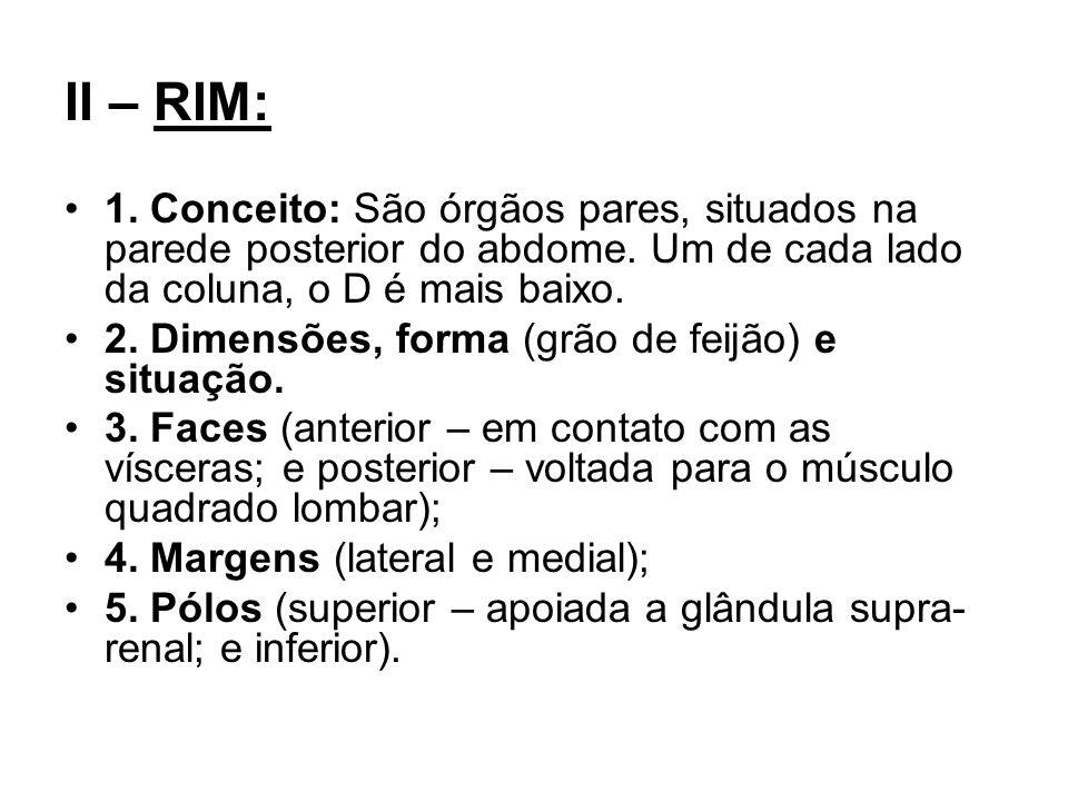 II – RIM: 1. Conceito: São órgãos pares, situados na parede posterior do abdome. Um de cada lado da coluna, o D é mais baixo. 2. Dimensões, forma (grã