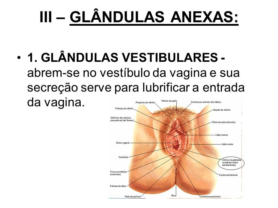 III – GLÂNDULAS ANEXAS: 1. GLÂNDULAS VESTIBULARES - abrem-se no vestíbulo da vagina e sua secreção serve para lubrificar a entrada da vagina.