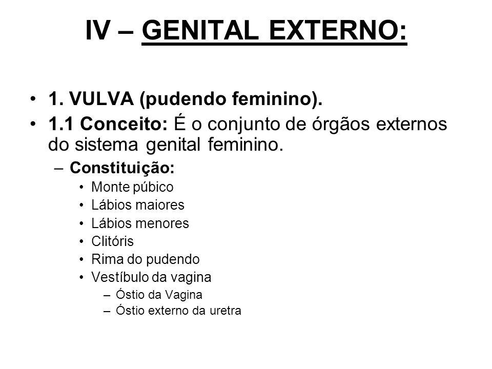IV – GENITAL EXTERNO: 1. VULVA (pudendo feminino). 1.1 Conceito: É o conjunto de órgãos externos do sistema genital feminino. –Constituição: Monte púb