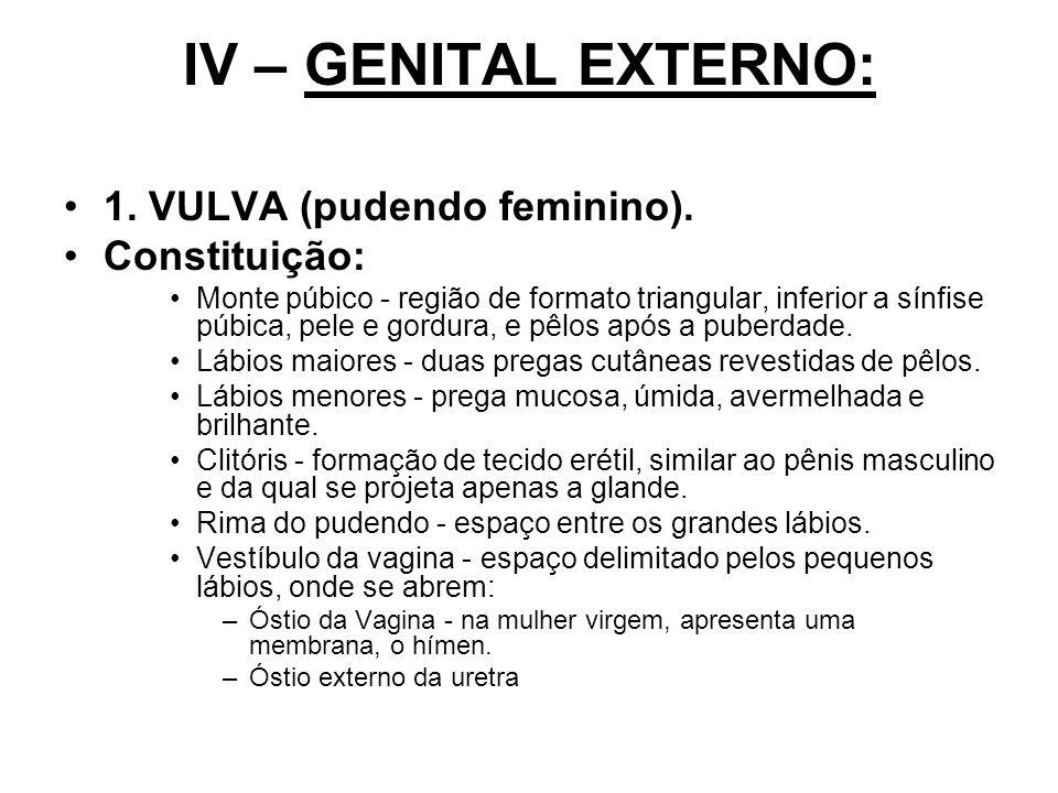 IV – GENITAL EXTERNO: 1. VULVA (pudendo feminino). Constituição: Monte púbico - região de formato triangular, inferior a sínfise púbica, pele e gordur