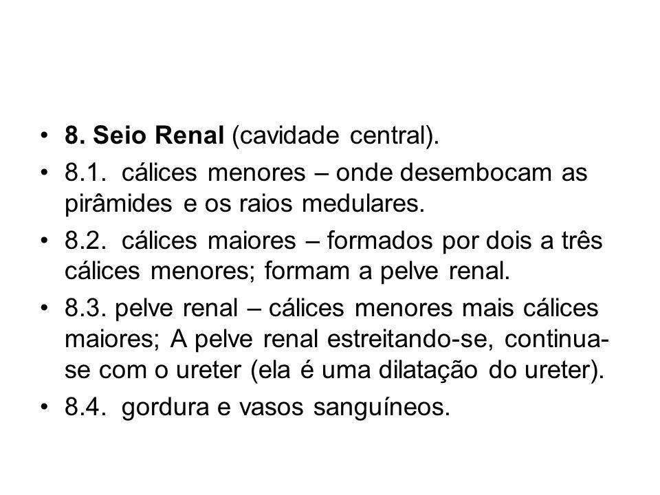 8.Seio Renal (cavidade central). 8.1.