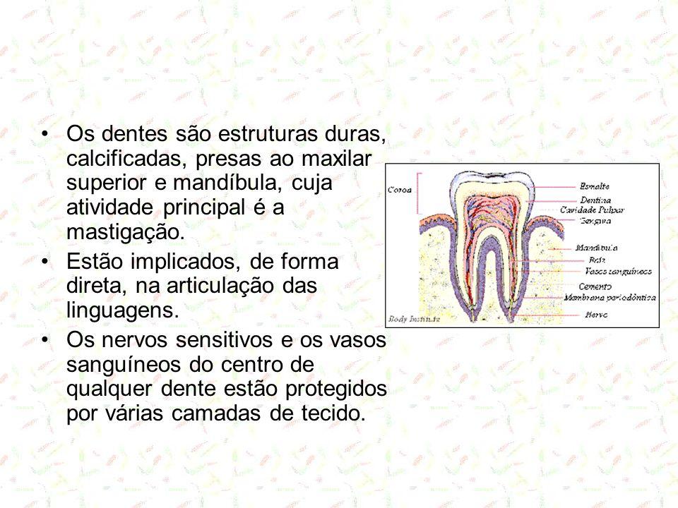 Dentes - constituição A porção mais externa, o esmalte é a substância mais dura.